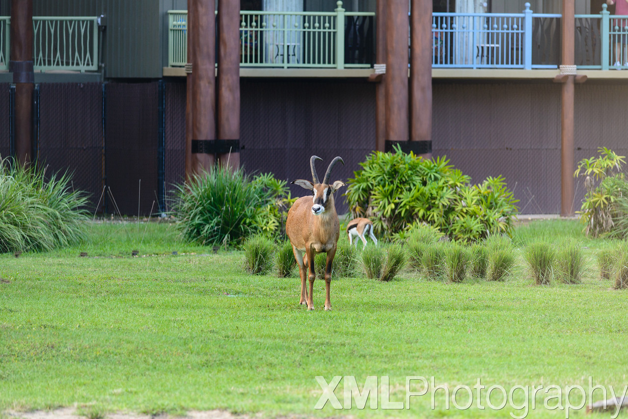 Photos from Disney's Animal Kingdom Lodge Jambo House