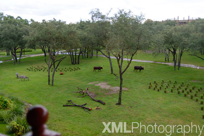 Disney's Animal Kingdom Lodge Arusha View