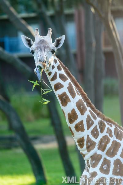 Photos from Disney's Animal Kingdom Lodge Jambo House