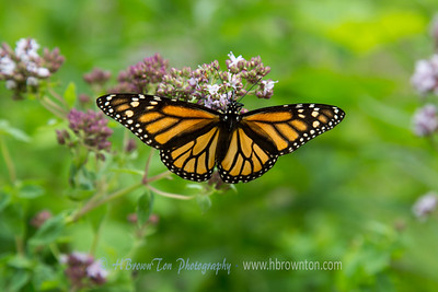 Cana Island Butterfly