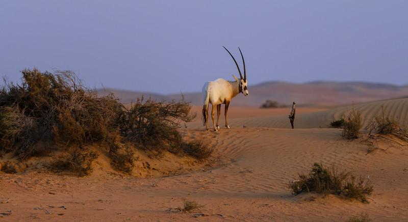 Dubai Desert Life