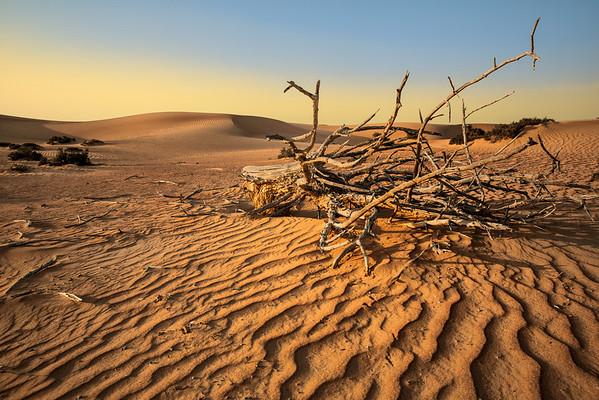 Desert Silence - Dubai, UAE