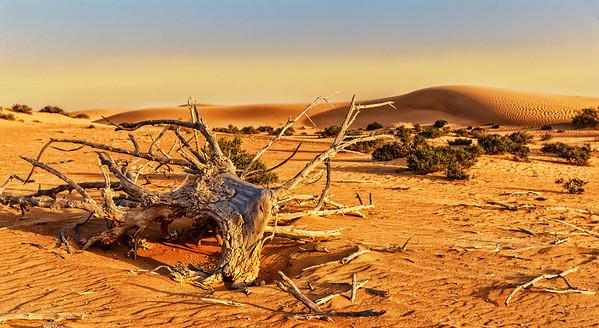 Desert Silence - Outside of Dubai, UAE