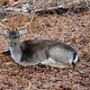 Deer in Dunham Park.
