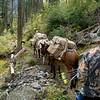 Elk Hunt 034