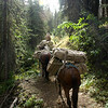 Elk Hunt 040