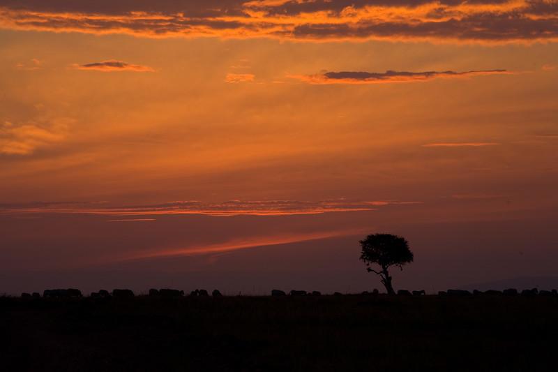 20100912_Maasi Mara_698