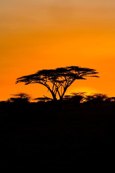 20100904_Samburu_0145