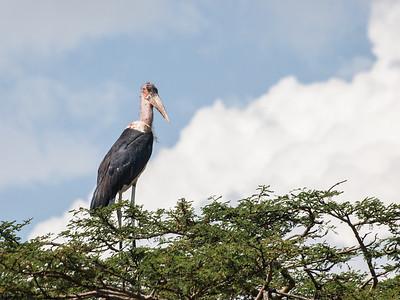 Stork in tree