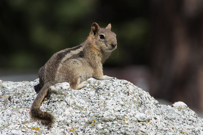 Local Resident, Mt Whitney Portal