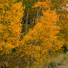 2016_10_14 Lundy Canyon Easter Sierra Aspens-91