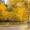 2016_10_14 Lundy Canyon Easter Sierra Aspens-84