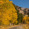2016_10_13 Olmstead Peak & Lundy Canyon Aspens-159