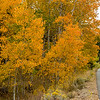2016_10_14 Lundy Canyon Easter Sierra Aspens-100