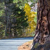 2016_10_13 Olmstead Peak & Lundy Canyon Aspens-179