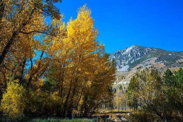 2016_10_13 Olmstead Peak & Lundy Canyon Aspens-149