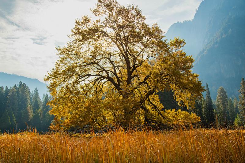2016_10_13 Yosemite Valley Morning-72-HDR