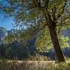 2016_10_12 Yosemite Valley Afternoon-2644