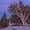 2016_10_14 Ancient Bristle Cone Forest Easter Sierras Sunset-38
