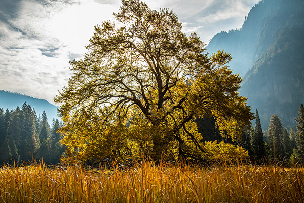 2016_10_13 Yosemite Valley Morning-72
