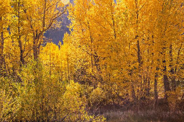 2016_10_13 Olmstead Peak & Lundy Canyon Aspens-151
