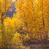 2016_10_13 Olmstead Peak & Lundy Canyon Aspens-151