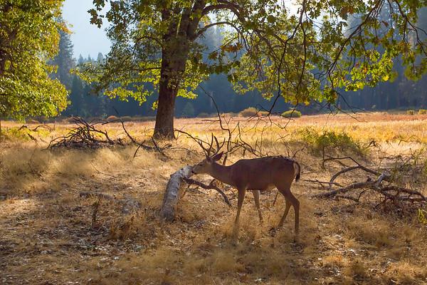 2016_10_13 Yosemite Valley Morning-57