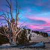 2016_10_14 Ancient Bristle Cone Forest Easter Sierras Sunset-16