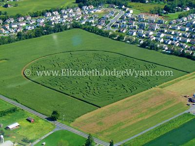 Raub's Corn Maze