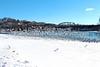 Seagulls take flight above the Lehigh River, Easton, PA 1/26/2014