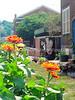 Compost garden center 7/14/2012