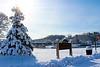 Snowy First Christmas Tree, Easton, PA 2/4/2014