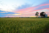 Wheat filled Sunset in Forks Township, Easton, PA 6/17/2013