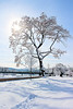 Snowy Scene, Riverside Park Tree, Easton, PA 2/4/2014