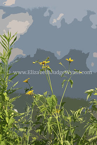 Lehigh River Flowers Easton PA 7/11/2014