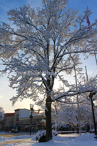 Snowy Scene, Centre Square Tree, Easton, PA 2/4/2014