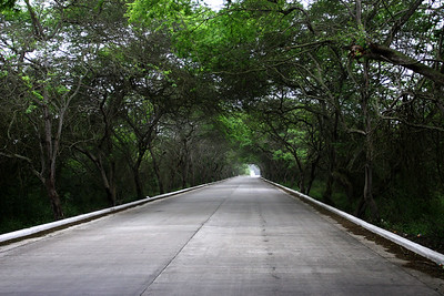 Tree covered section of the road to Los Frailes.