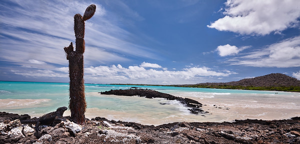 Marine iguana at Garrapatero beach