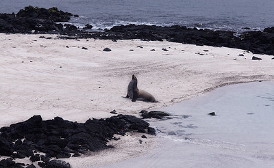 Photo from Galapagos, Ecuador. Copyright Paul Bertner 2016.