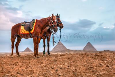 Giza-8