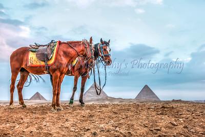 Giza-9