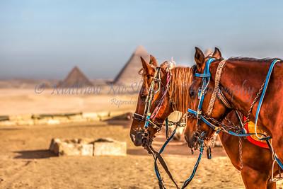 Giza-20