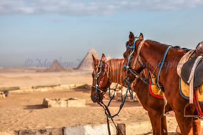 Giza-21