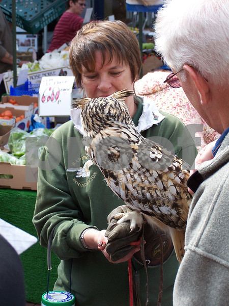 Market days often have added attractions and this time it is a visitor from the Raptor Foundation (nr St Ives, Cambridgeshire) on a fund raising mission.