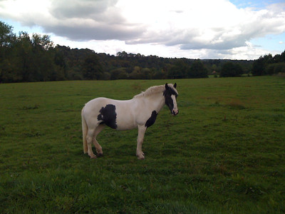 Horse chilling in Chilworth
