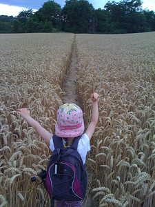 Into the wheat