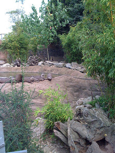 Otters on land