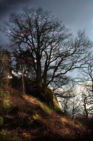 Shropshire & Staffordshire