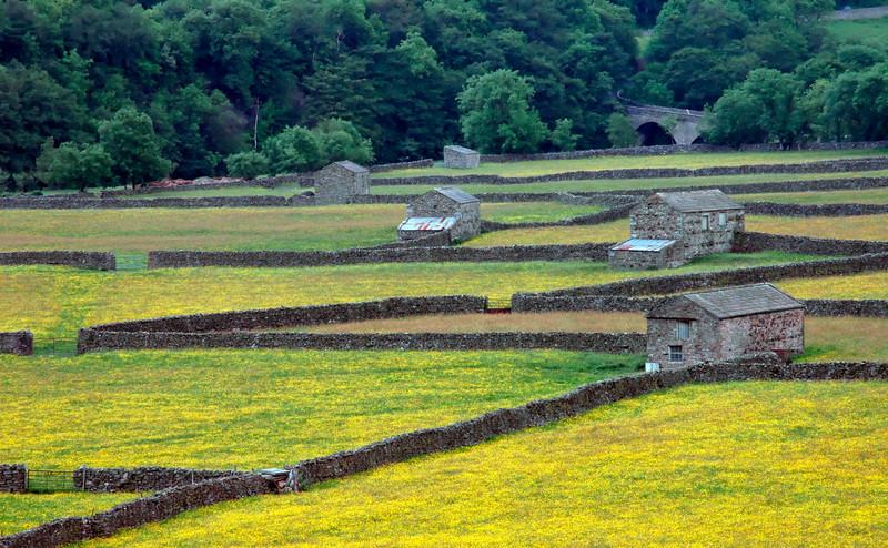Stone barns and walls amongst fields of buttercups - Gunnerside, England