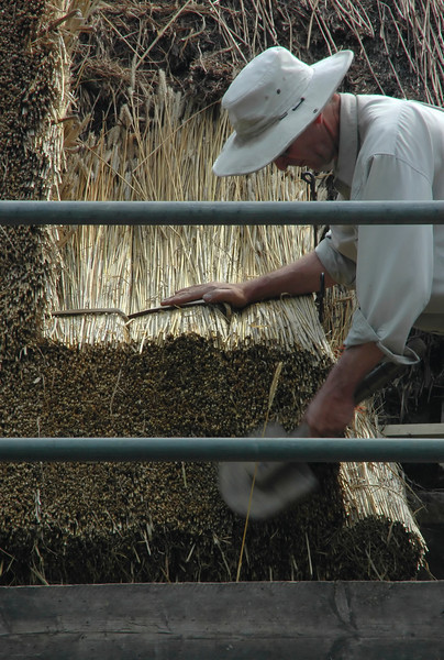 Thatcher using paddle to apply fresh reeds to thatched roof - Long Compton, England